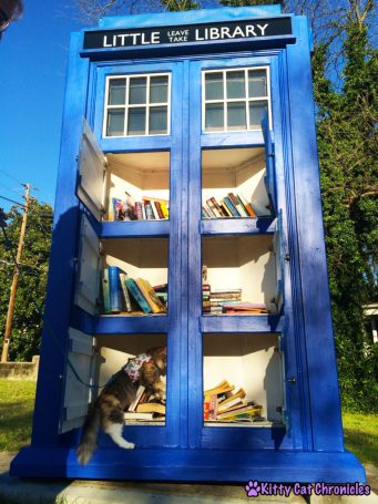 4 Destinations Close to Home to Take Your Adventure Cat - Sophie in TARDIS library