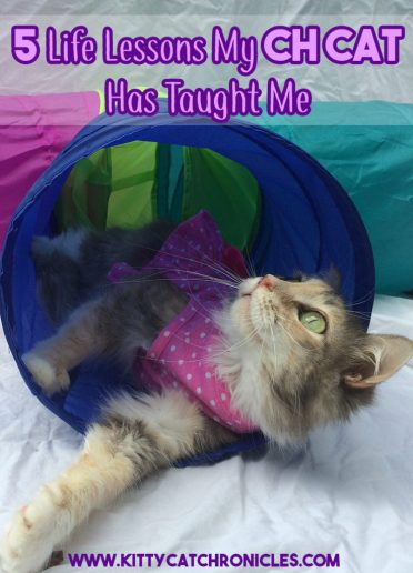 5 Life Lesson My CH Cat Has Taught Me