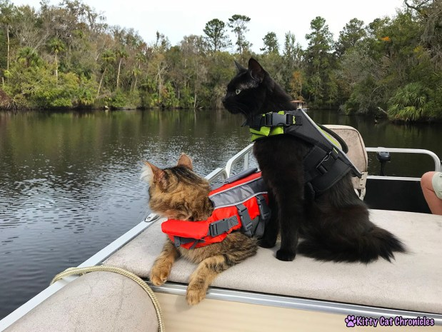 The KCC Adventure Team Tours the St. John's River - KCC Adventure Team, cats on a boat