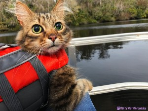 The KCC Adventure Team Tours the St. John's River - Caster, cat on boat
