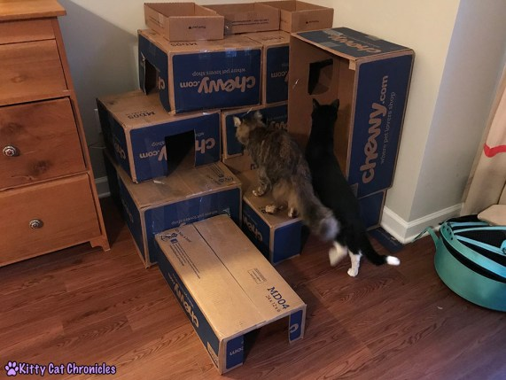 Repurpose Those Cardboard Boxes: Make a DIY Box Fort! - Quality Control Inspection