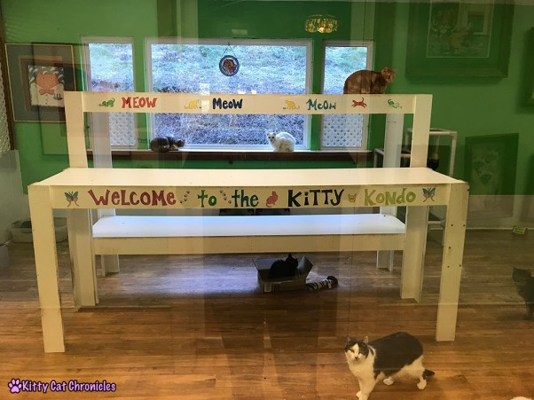 The KCC Adventure Team in Asheville: The Catman2 Shelter - cat room