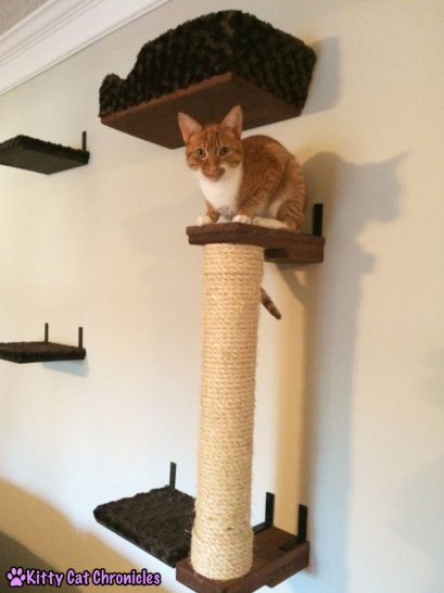 A #WobblyWednesday Update with Radagast the Orange - Raddy on the Cat Wall