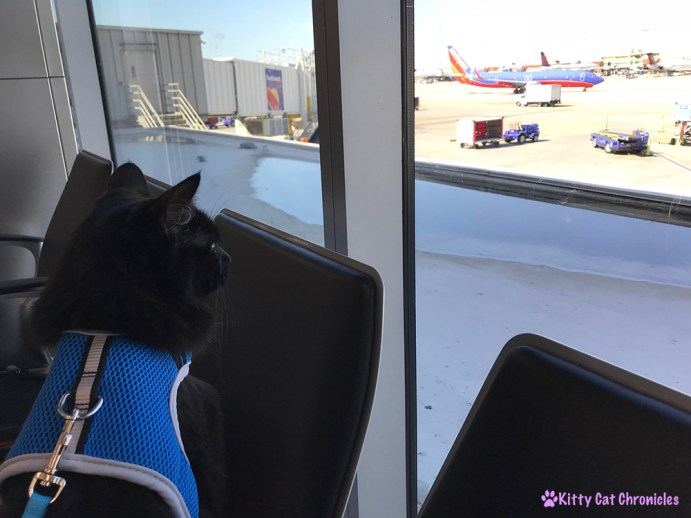 Everything You Need to Know About Flying with a Cat - Kylo Ren at the airport