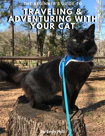 The Beginner's Guide to Traveling & Adventuring with Your Cat