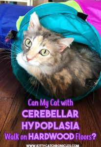 Can My Cerebellar Hypoplasia Cat Walk on Hardwood Floors?