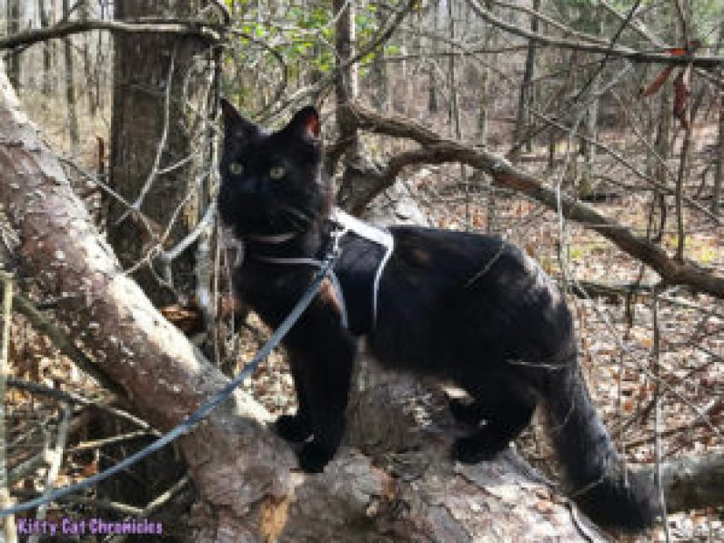 Kylo Ren's Birthday Hike at Brown's Mount - cat on a log