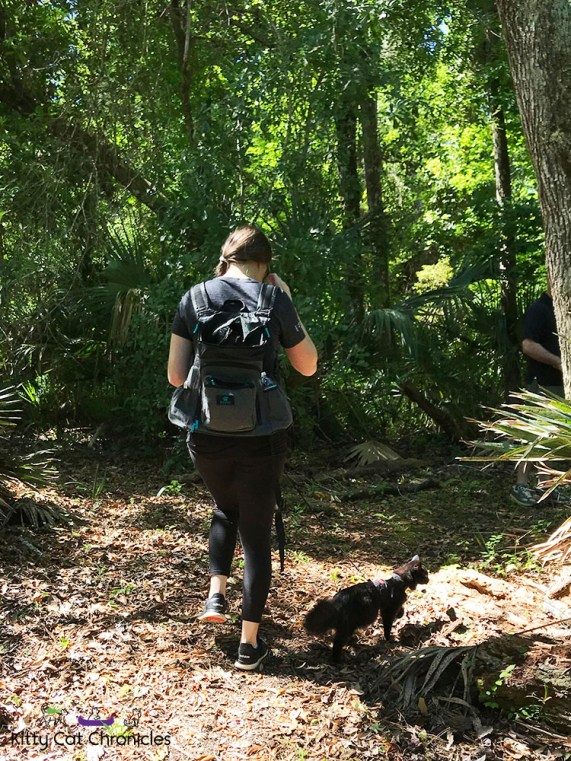 Hiking in the Welaka State Forest with Kylo Ren - black cat hiking in woods