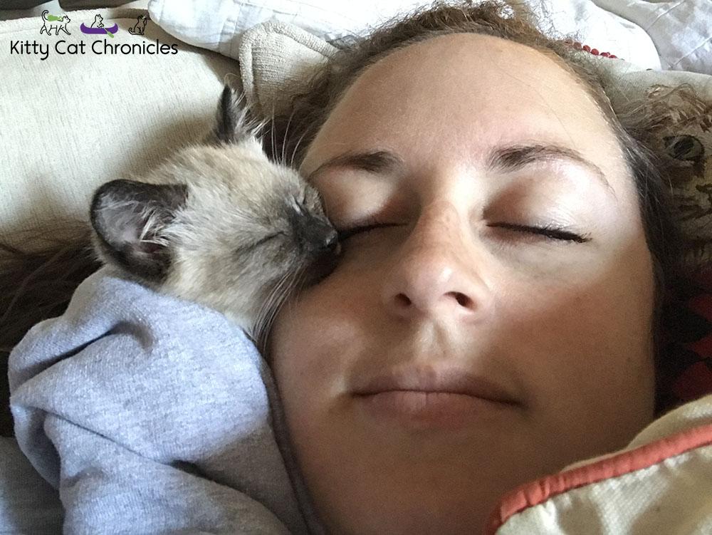 Meet Our First Foster Kitten, Gryphon! - kitten snuggling