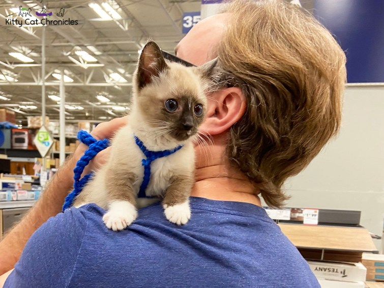 Gryphon the Kitten at Lowe's