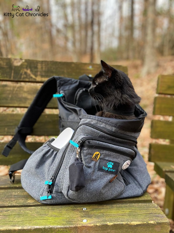 Family Hike in Caster's Memory - Kylo in cat backpack
