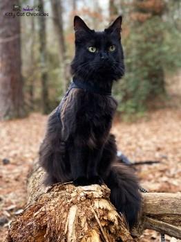 Family Hike in Caster's Memory - Kylo Ren, cat on log