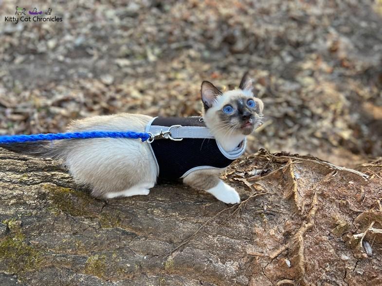 Piedmont National Wildlife Refuge with Kylo Ren & Gryphon - cat on hike