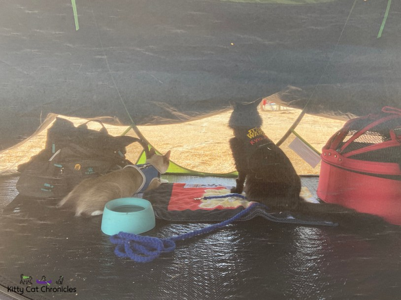 cat tent on the beach