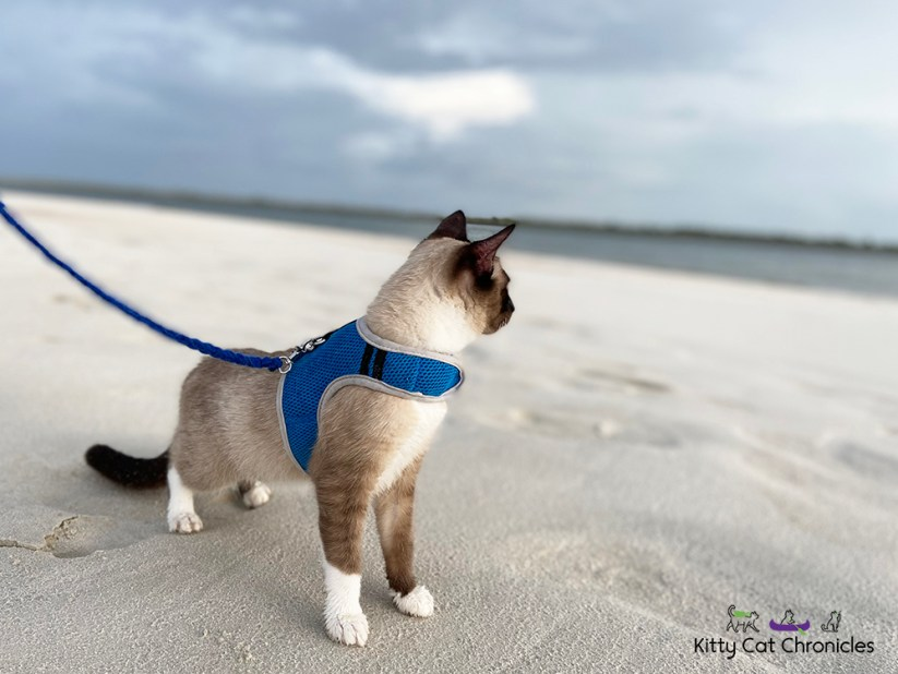 cat at the ocean