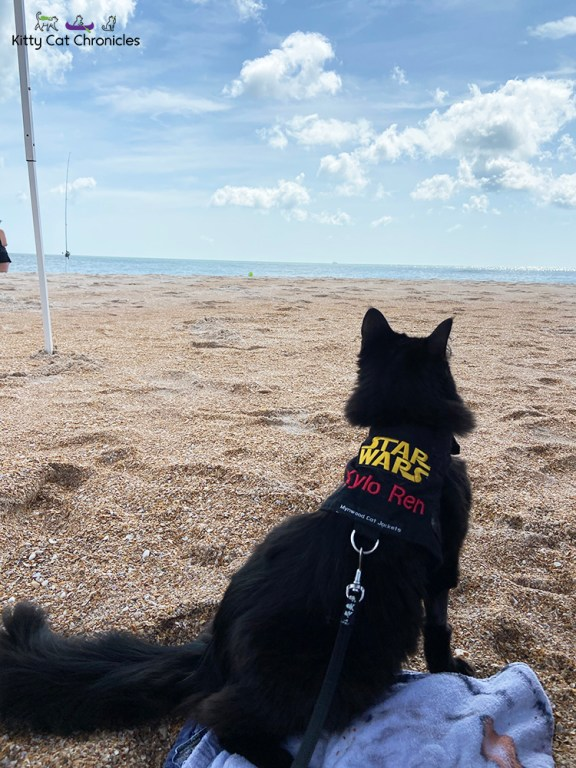 Florida Beach Days with Kylo Ren and Gryphon - black cat on the beach