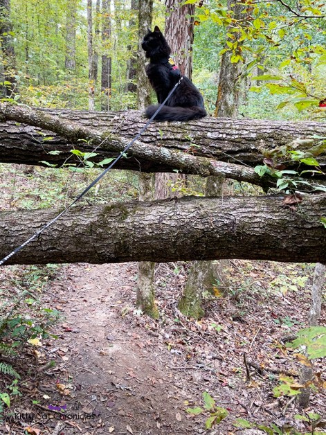 a black cat on a fallen tree