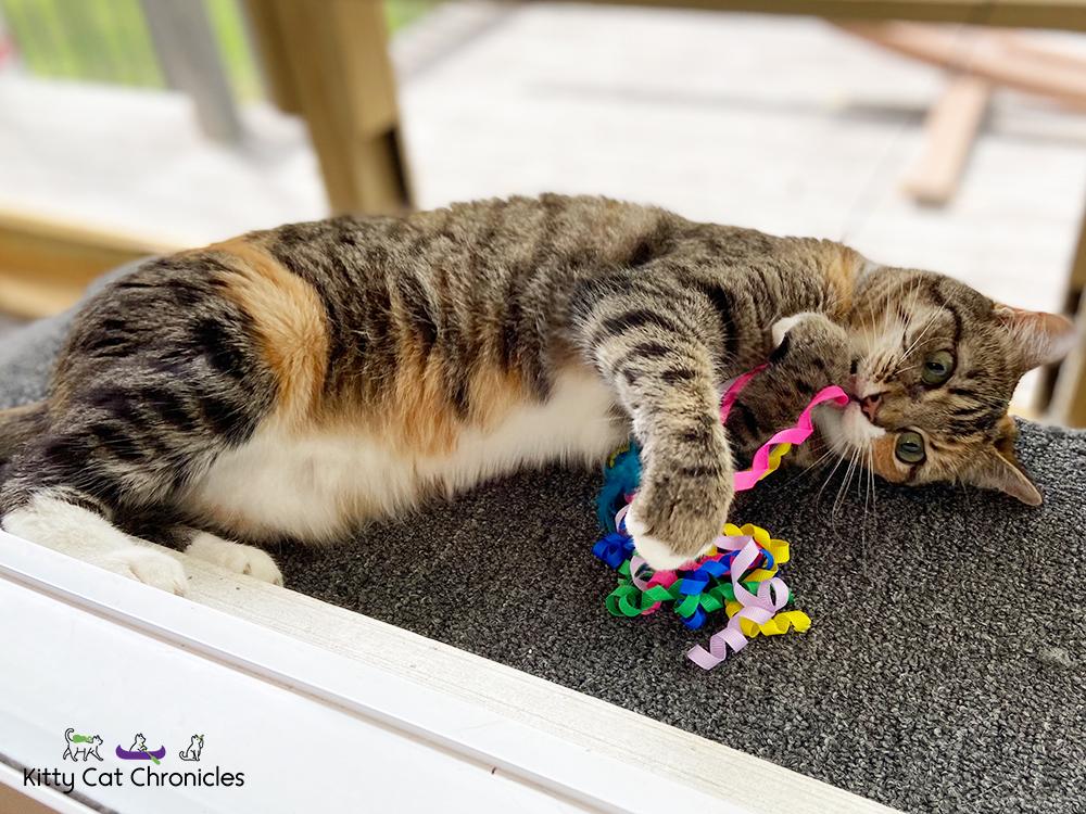 Tabby Cat on a catio