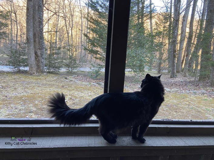 black cat on a screened in porch
