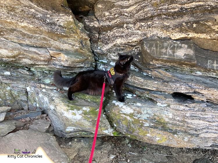 black cat climbing rocks