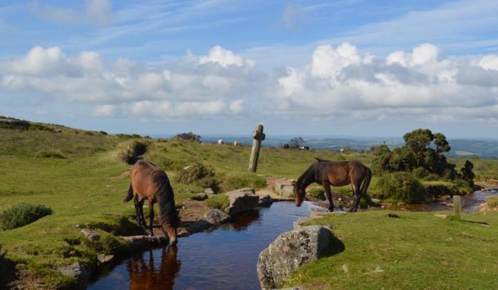 hästar i dartmoor
