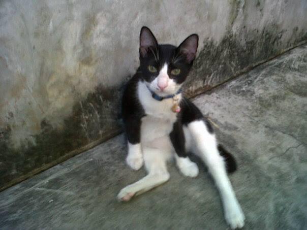 kiddo - kittykrafty.com