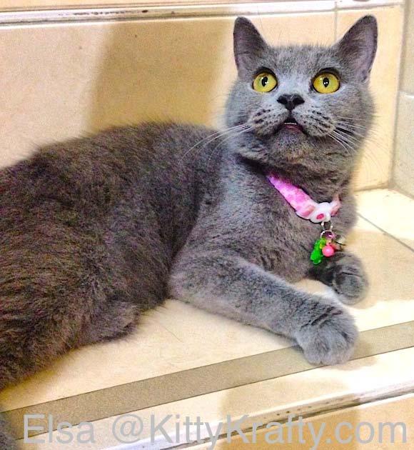 Elsa, kucing Kelik British Shorthair
