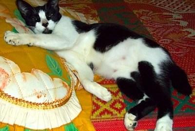 Kucing Pembaca : Dagu - Febridiana