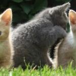 Kucing menggaruk dan mencakar