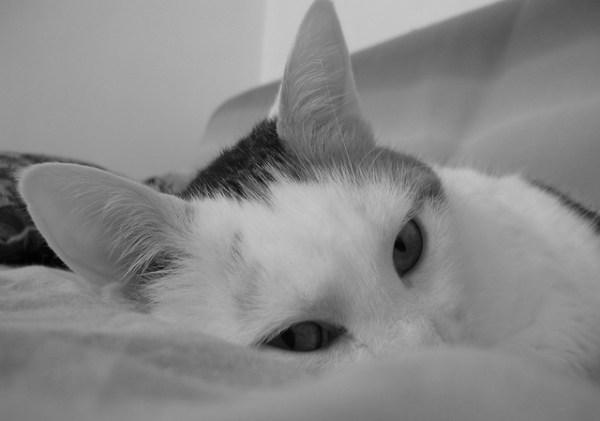 toxoplasma tidak dari kucing