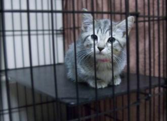 kandang kucing