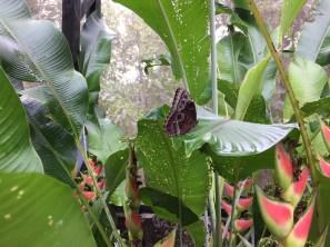 Butterfly Preserve.1