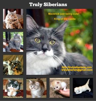 Truly Siberians