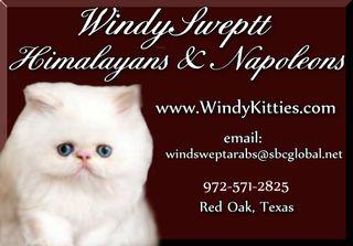 Windysweptt Cattery