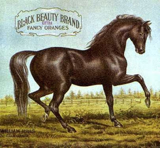 Black Beauty Brand
