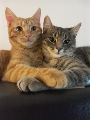 cat - love