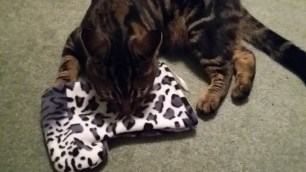 Gizmo and his Tillypops Stocking!