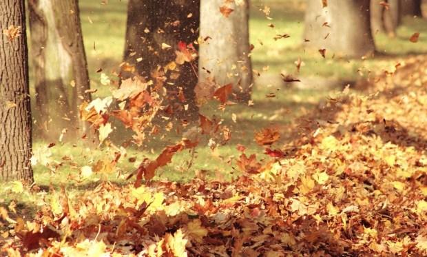 Sounds Forgotten on an Autumn Day