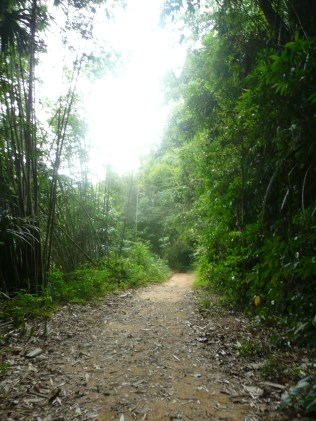 Khao Sok National Forest