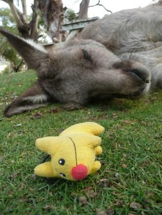Calvin napping with the kangaroo