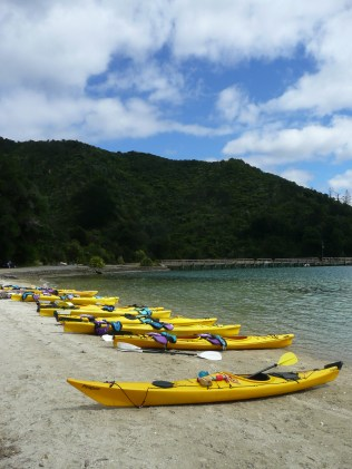 Kayaks lined up on the shore
