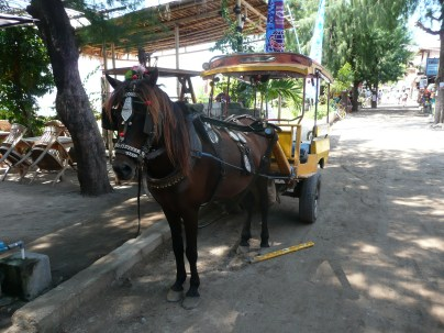 Taxi horse to get you around the island
