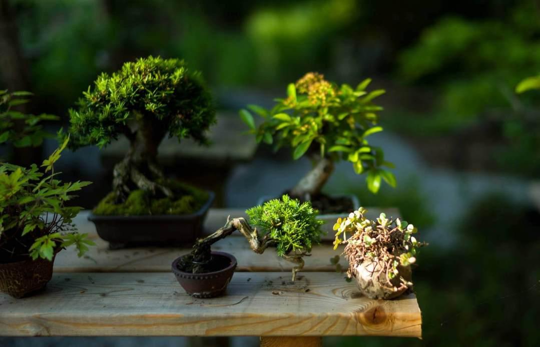 custodia-pensione-bonsai-palermo