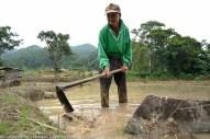 Kg. Mantob Kiulu 20 Jun 2013.Tongiak Saraung, 65 Tahun masih menggunakan kaedah tradisional untuk menyediakan sawah beliau di Kg.Mantob Kiulu.