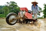 Kg. Mantob Kiulu 20 Jun 2013.Edjilon Tongiak, 36 tahun menggunakan mesin pembajak bersaiz kecil untuk membajak sawahnya di Kg.Mantob Kiulu.