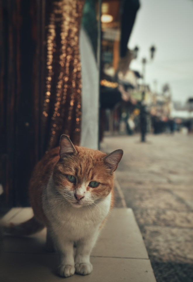 Üsküp Gezi Fotoğraf Rehberi, Üsküp Fotoğrafları