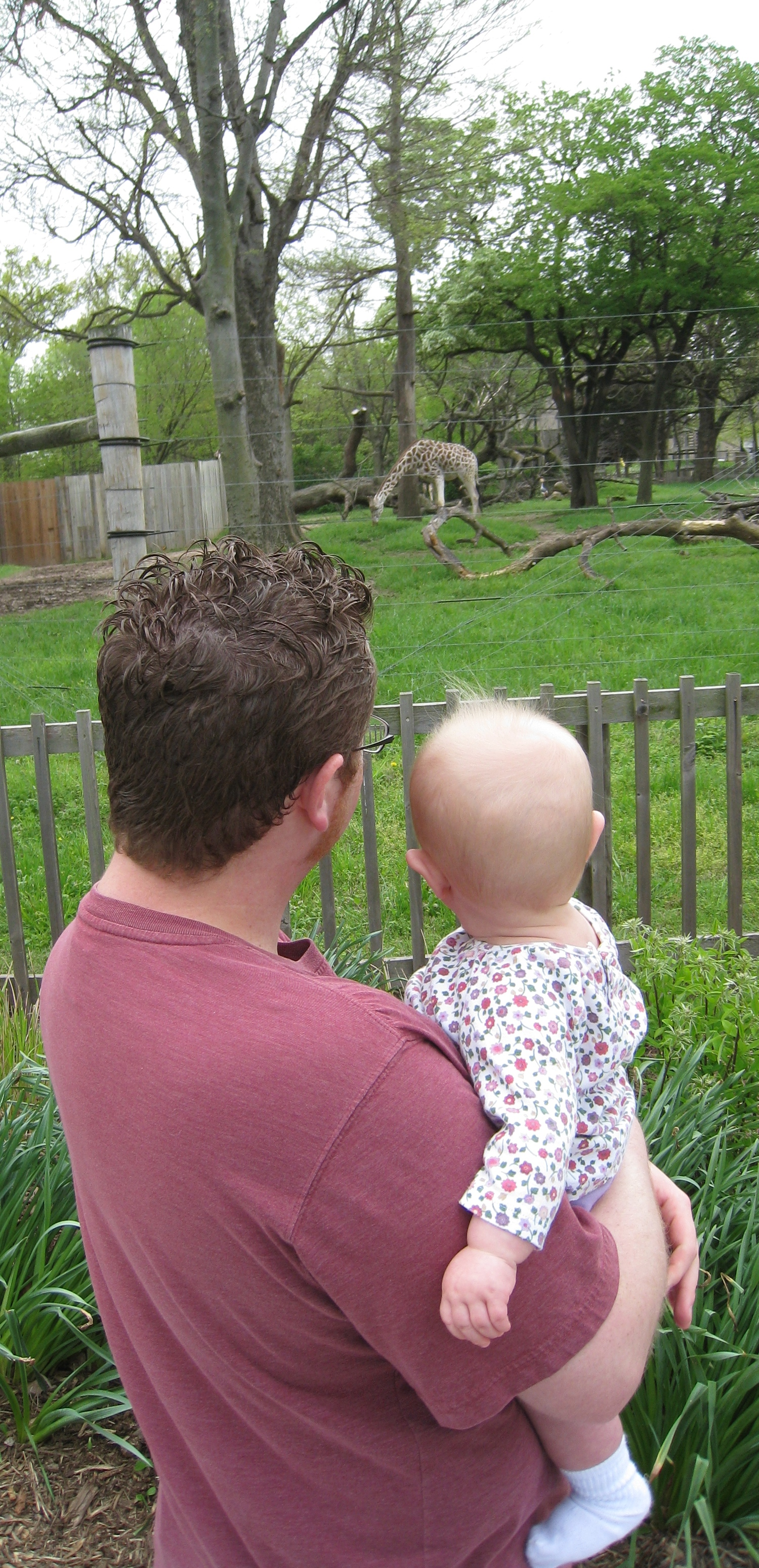 daddy-kivrin-and-a-giraffe