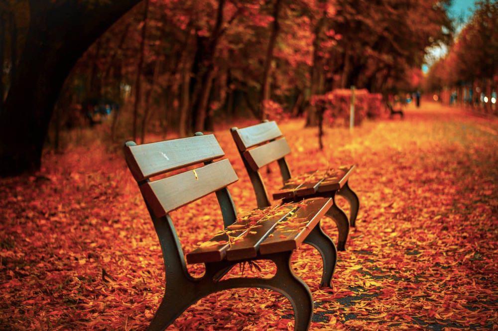 """椅子の「ベンチ」ではない英語の """"bench"""" の意味とは?"""