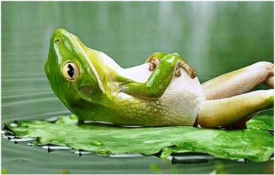 corps-parfait-funny-frog-kiwi-forme.net