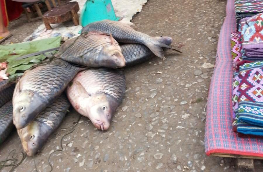 Fish in morning market Luang Prabang
